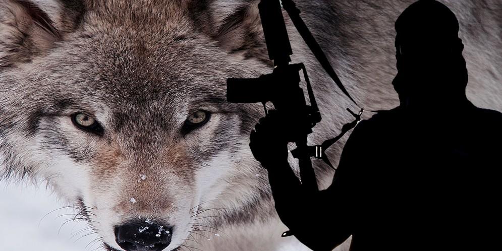 Internet blamed for radicalizing 'lone wolf'