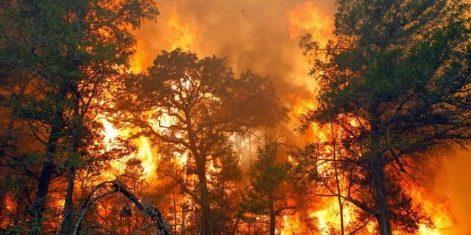 <i>Strict Liability</i> dan Ungkap Nama Korporasi Guna Menghentikan Kebakaran Lahan di Indonesia