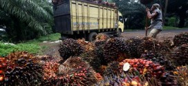 (Bahasa Indonesia) LAPORKAN DUGAAN KRIMINALISASI PETANI, KOPSA M KUNJUNGI INDONESIA POLICE WATCH (IPW)
